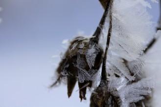 Wintergartendeko - Made of Nature.