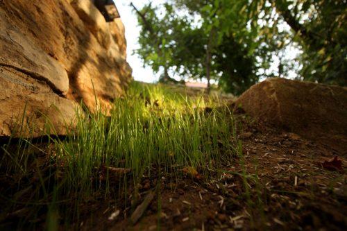 So langsam wächst Gras über die Sache...