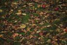 Bald sieht es zwischen unseren vielen Bäumen so aus: Überall Laub. Und dazwischen: Nahrungssuchende!