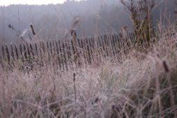 So schön kann Altgras sein - im Morgenreif eines Novembermorgens. Und lebendiger als jeder kurzgeschorene Rasen...