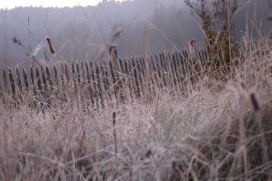 So schön kann Altgras sein - im Morgenreif eines Novembermorgens. Und auch im Winter lebendiger als jeder kurzgeschorene Rasen...