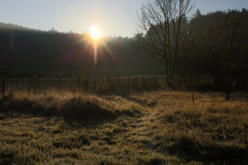 Garten im Novembermorgenlicht. Das Altgras ist Versteck, Jagd-, Nahrungs- und Überwinterungsgebiet für alle möglichen Tiere.