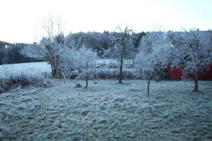 """Väterchen Frost überdeckt das öde und fade """"graubraun"""" aus dem Garten."""