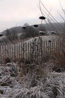 stauden-im-winter