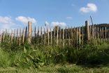 Der Grasstreifen am Zaun entlang ist das Kontrastprogramm zur landwirtschftlich intensiv genutzten Nachbarwiese. Er bleibt das ganze Jahr über stehen und wird - wenn überhaupt - nur meterweise mal per Hand gekürzt. Vom Zaun aus jagen Vögel dort nach Insekten. Der Igel kruschtelt sich lautstark durch. Kröten haben wir dort auch schon entdeckt.