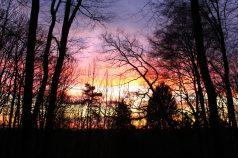 Silvester im Wald_2017_2