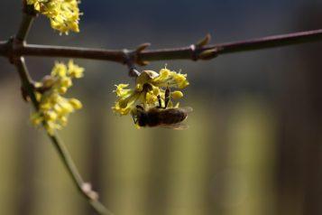 Bienenbesuch.
