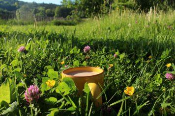 Wildnisecken im Garten_11