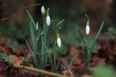 Frühling in den Startlöchern - 1