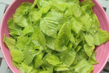 Salat_aus_dem_Wald - 1